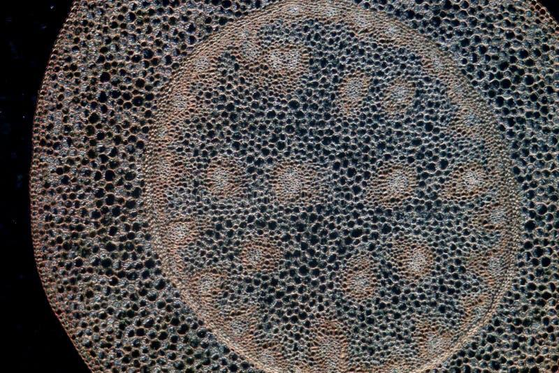 Fond de centrale de micrographe de la Science images stock