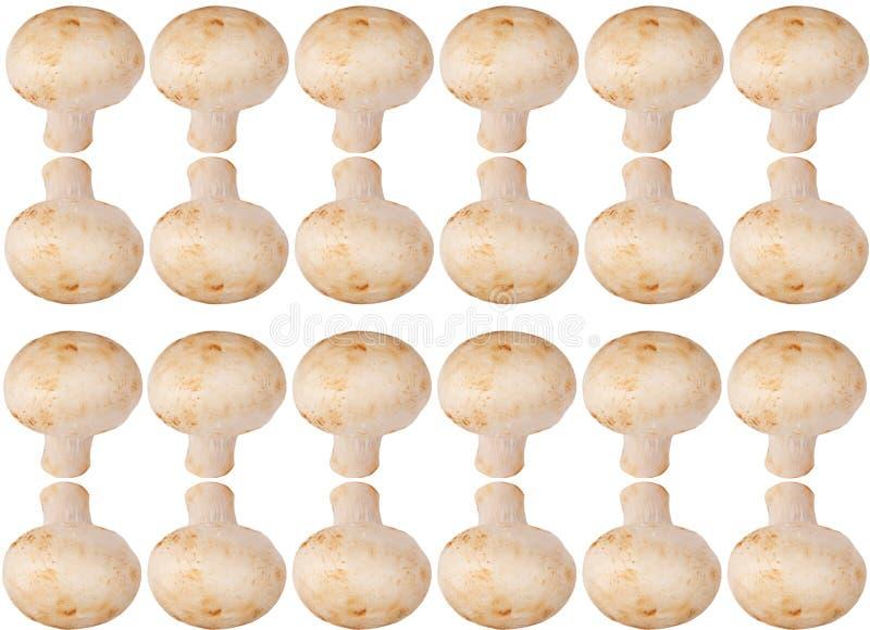 Fond de champignon de couche image stock