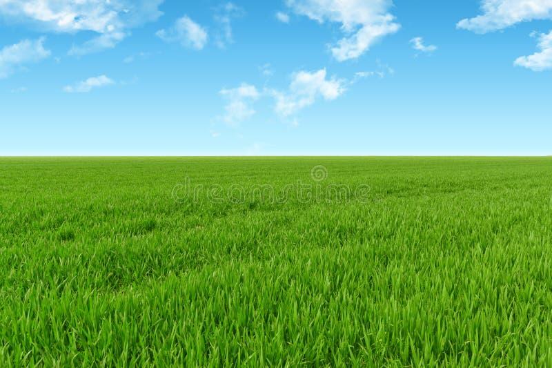 Fond de ciel et d'herbe image stock