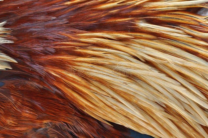Fond de clavette photos stock