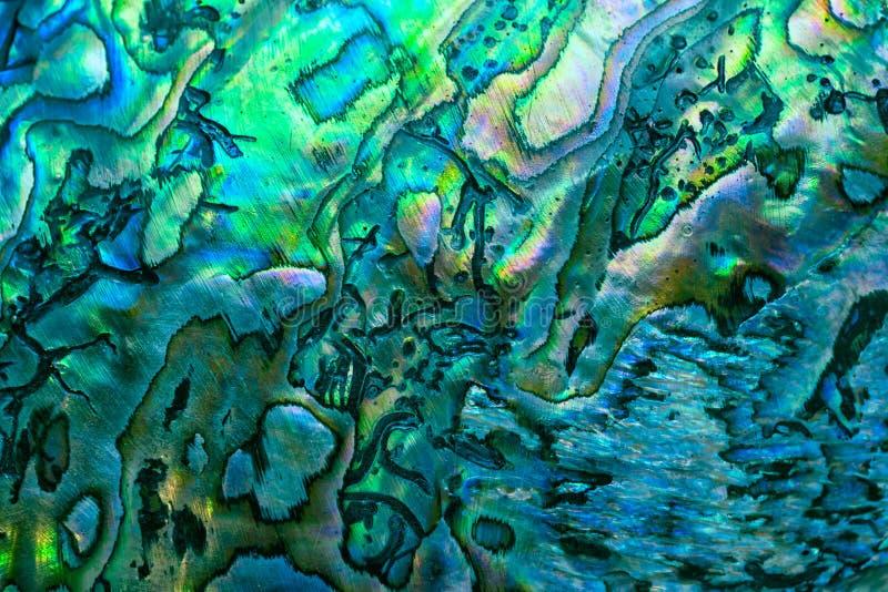 Fond de coquille de paua du Nouvelle-Zélande image stock