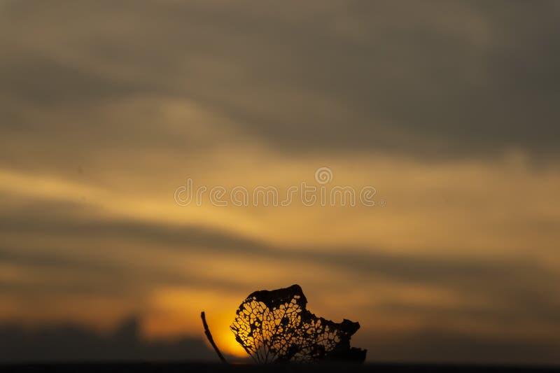 Fond de coucher du soleil avec les couleurs chaudes et la feuille fanée, coucher du soleil de papier peint images libres de droits