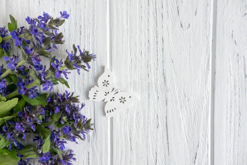 Fond de couleur pourpre de wildflowers Fond pour une banni?re avec des couleurs naturelles Banni?re avec des fleurs de Copyspeis  image libre de droits