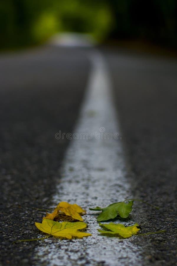 Fond de couleur quatre différente des feuilles sur une route goudronnée photographie stock