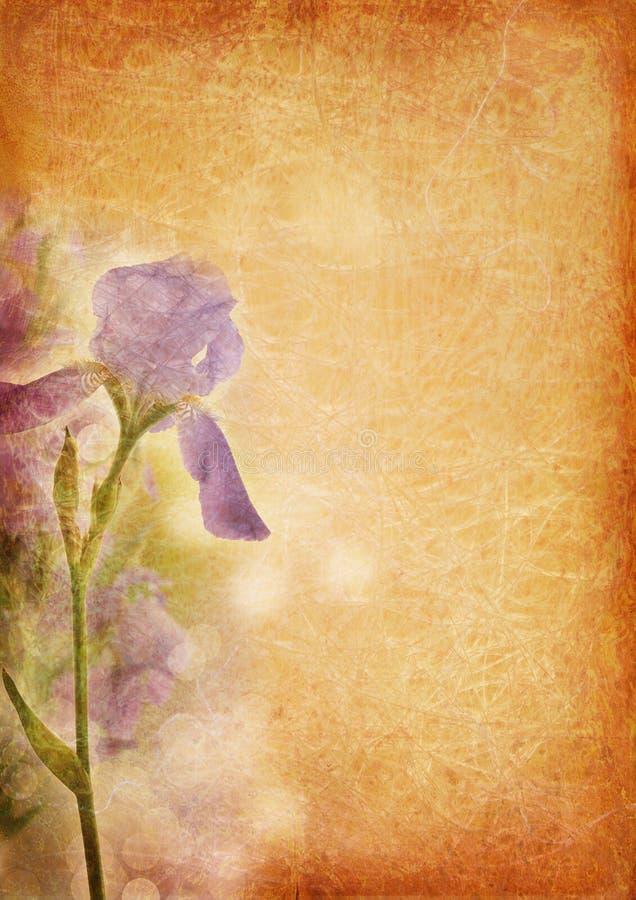 Fond de cru avec l'iris illustration de vecteur