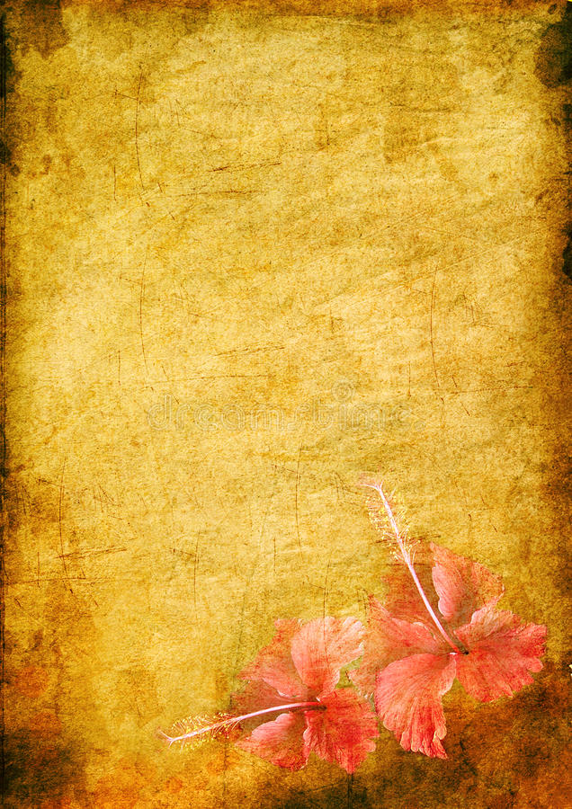 Fond de cru avec un hibiskus illustration libre de droits