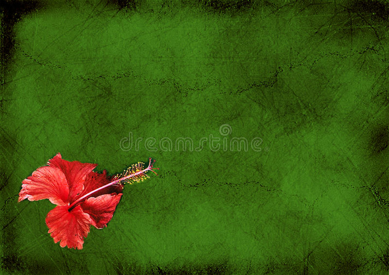 Fond de cru avec un hibiskus illustration de vecteur