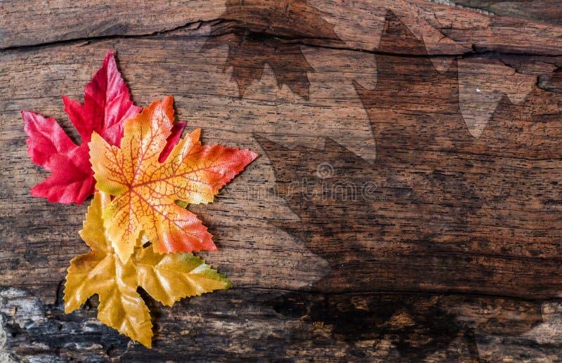 Fond de feuille d'érable, jour de thanksgiving photos libres de droits
