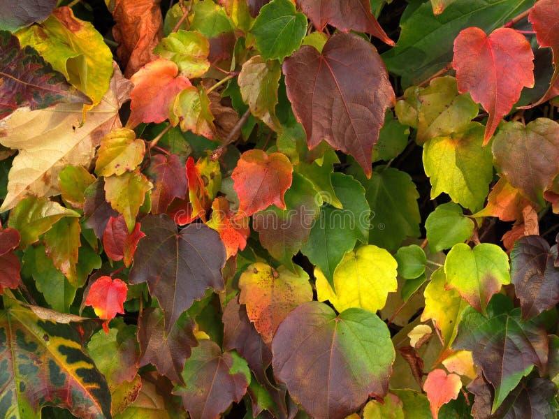 Fond de feuilles d'automne images stock