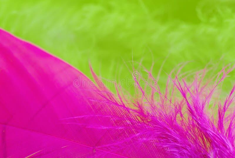 Fond de fin vers le haut d'image de feathe vert et pourpre coloré photographie stock libre de droits