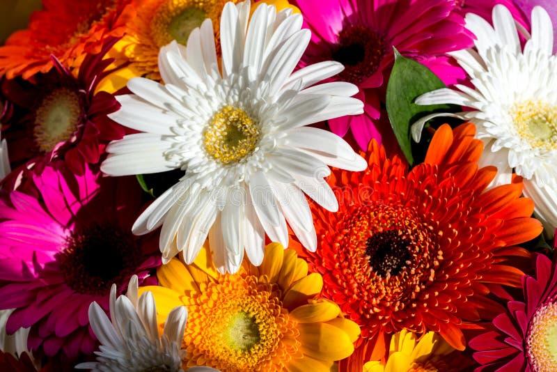 Fond de fleur avec les gerberas d'orange, jaunes, roses et blancs stupéfiants Bouquet des fleurs color?es de gerbera images libres de droits