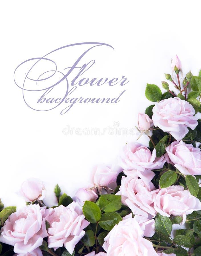 Fond de fleur d'art pour la carte de voeux photographie stock
