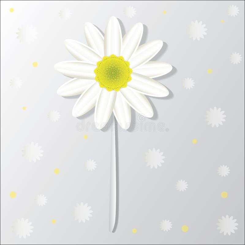 Fond de fleur de camomille images stock
