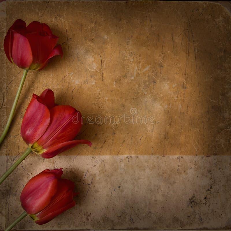 Fond de fleur de cru photos libres de droits