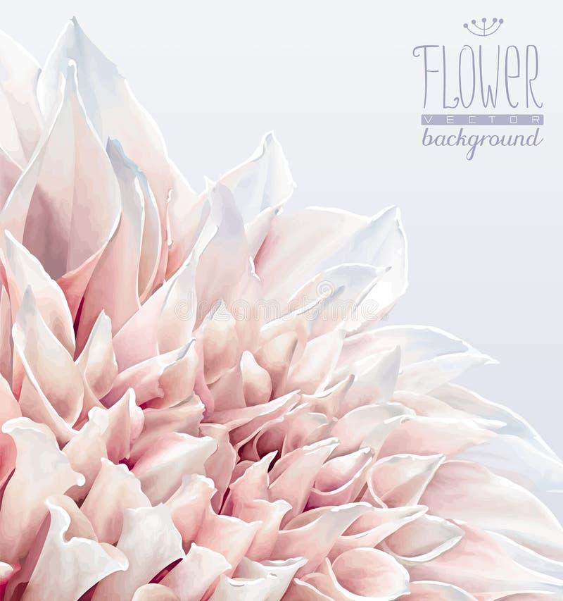 Fond de fleur de dahlia illustration stock