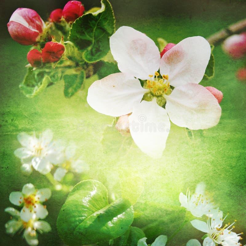 Fond de fleur de ressort image libre de droits