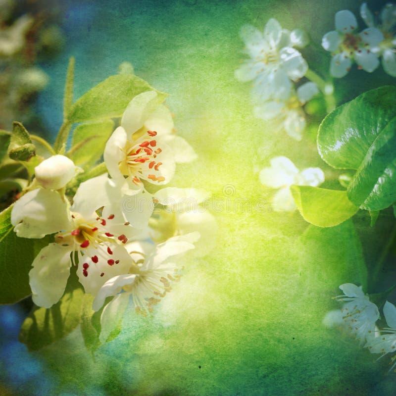 Fond de fleur de ressort photos stock