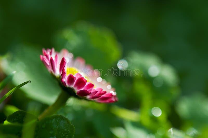 Fond de fleur de source image stock