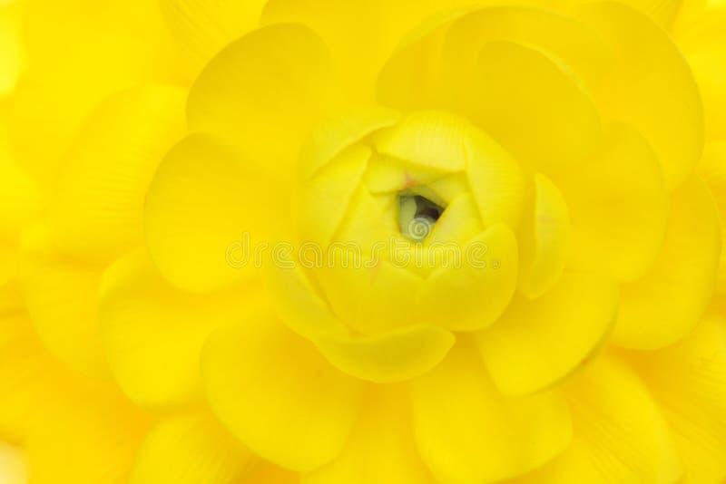 Fond de fleur de source photo libre de droits