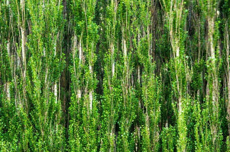 Fond de forêt photos stock