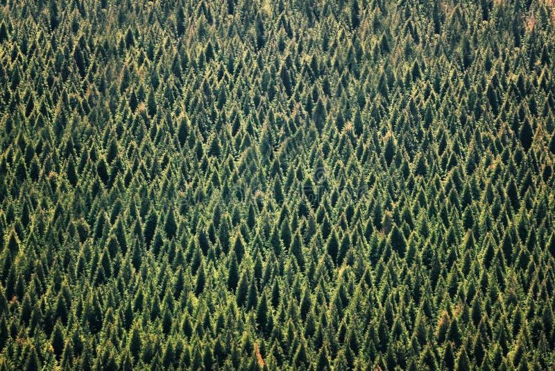 Fond de forêt avec le modèle d'arbres image libre de droits
