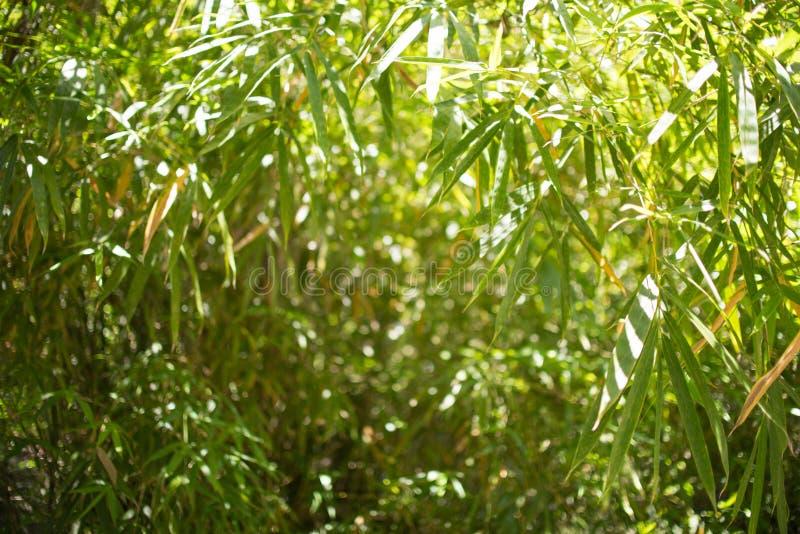 Fond de forêt de bambous avec le bambou naturel photos libres de droits