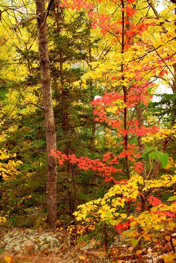Fond de forêt d'automne photo stock