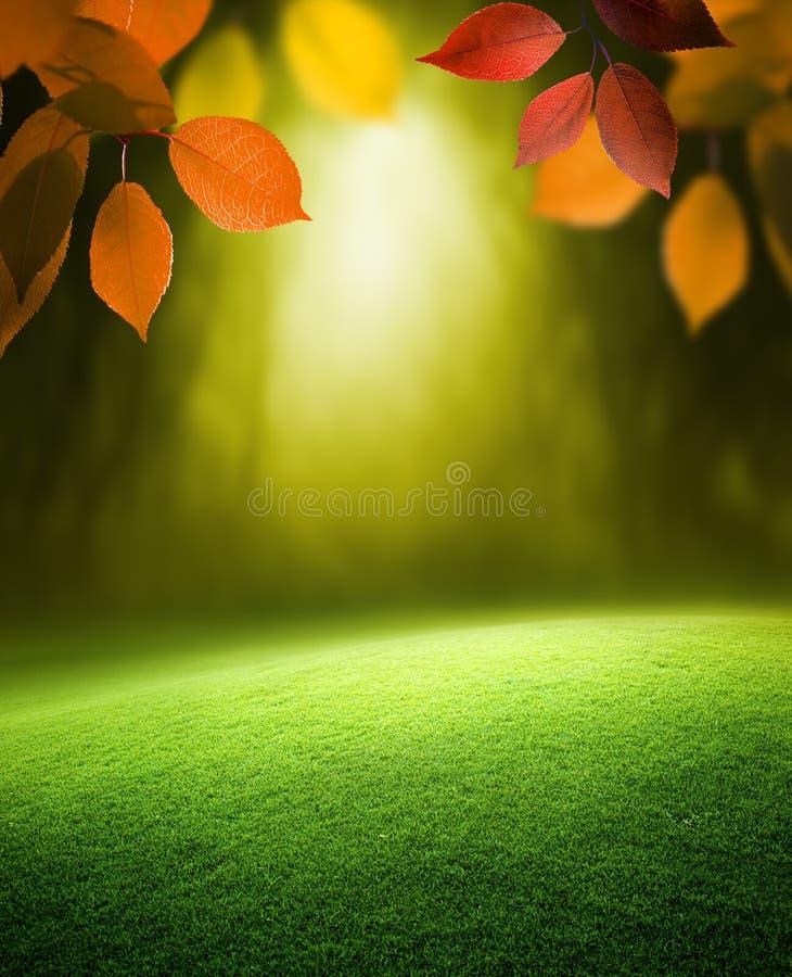 Fond de forêt d'automne image stock
