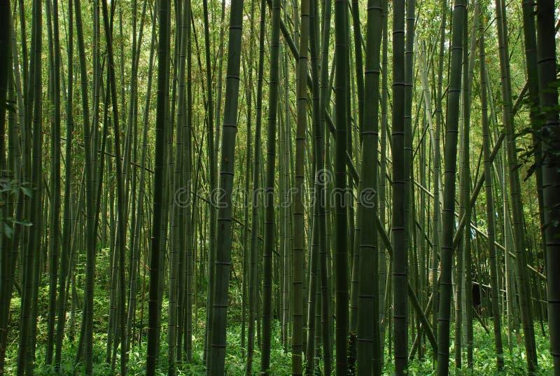 Fond de forêt de bambous photos libres de droits