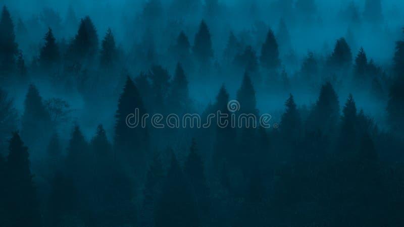 Fond de forêt foncée avec les pins et le brouillard photo stock