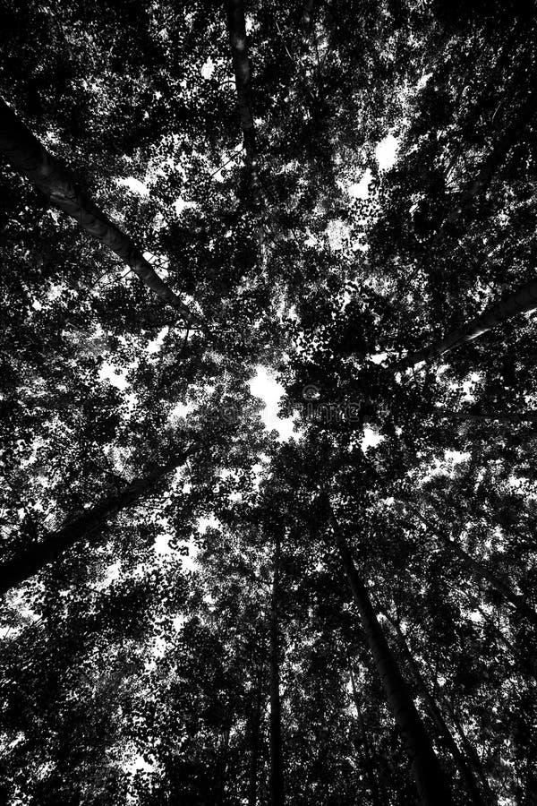 Fond de forêt humide photographie stock