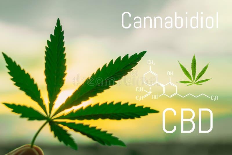 Fond de formule de molécule de Cannabidiol avec la feuille de marijuana Structure moléculaire CBD illustration stock