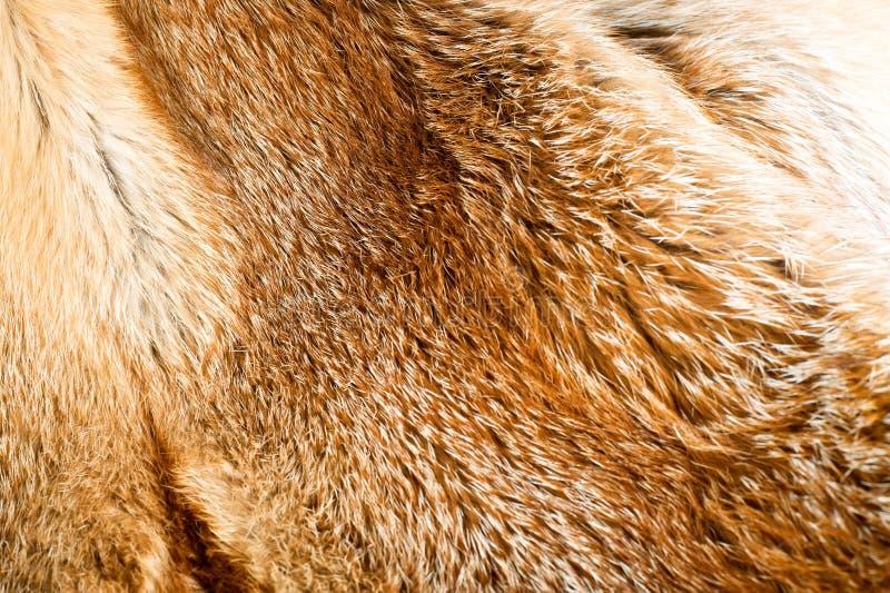 Fond de fourrure de Fox photographie stock