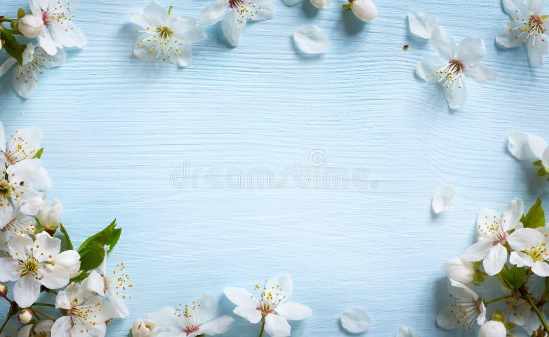 Fond de frontière d'Art Spring avec la fleur blanche photo stock