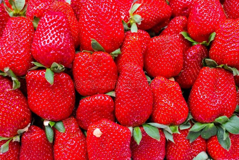 Fond de fruit des fraises organiques fraîches closeup photographie stock libre de droits