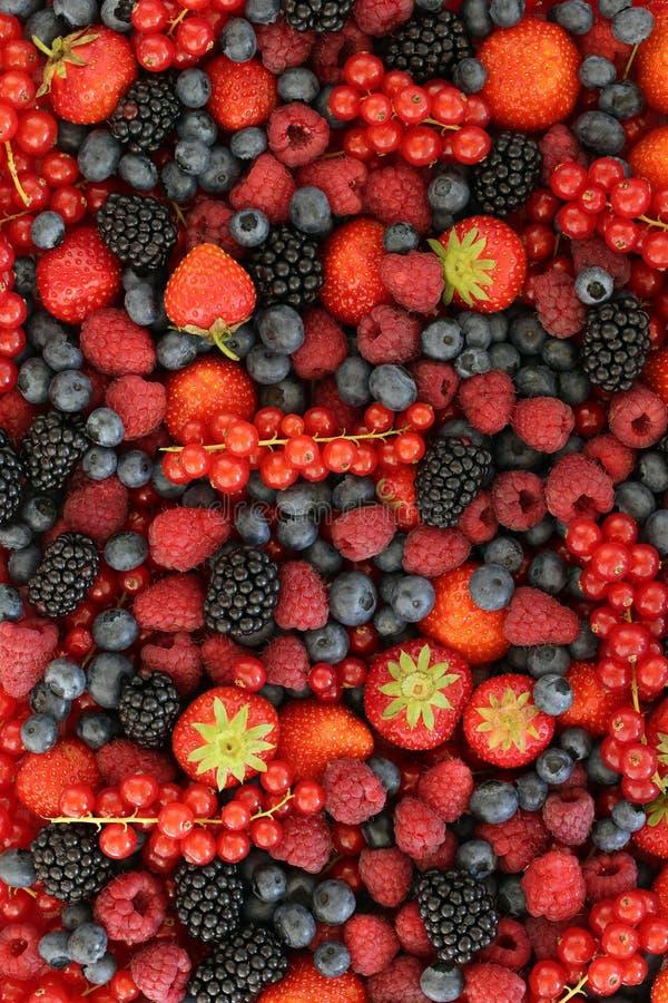Fond de fruits frais photographie stock