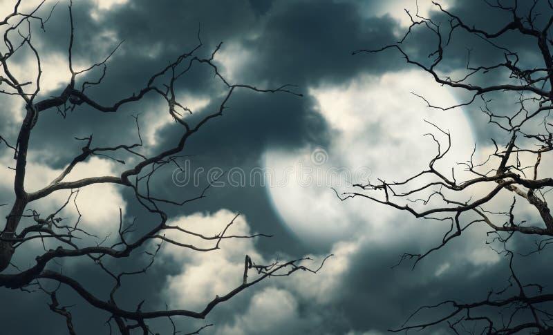 Fond de Halloween avec la forêt, le ciel et la lune image libre de droits