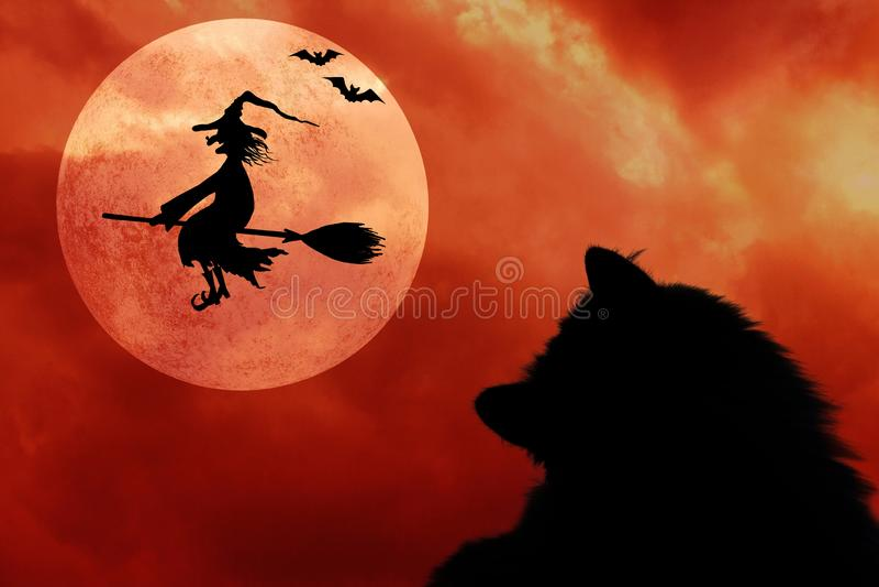 Fond de Halloween avec le chat, les battes, la pleine lune et la sorcière de vol illustration stock