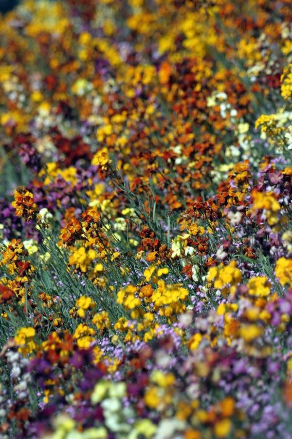 Fond de jardin de fleurs photo stock