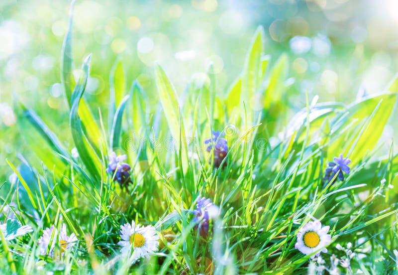 Fond de jardin de ressort avec des fleurs dans le jour ensoleillé photo stock