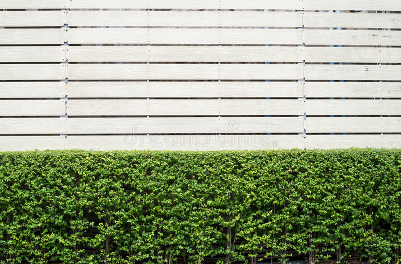 Fond de jardinage et de cadre en bois photographie stock libre de droits