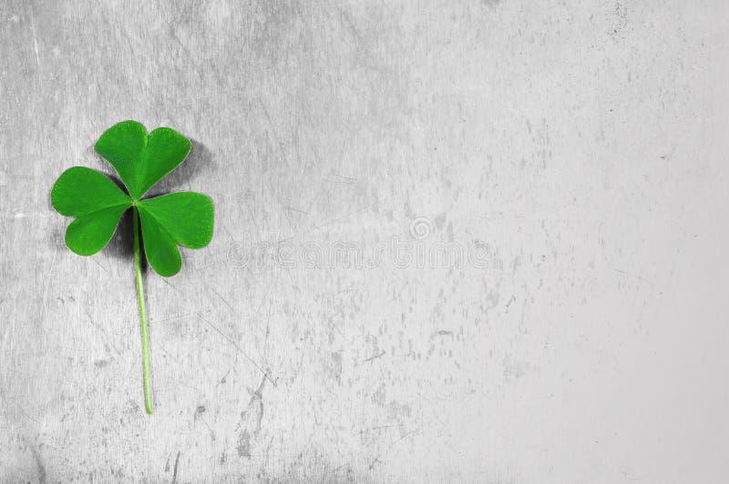 Fond de jour de St Patricks avec l'oxalide petite oseille photographie stock
