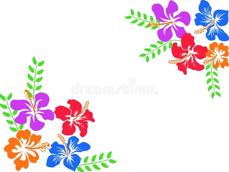 Fond de ketmie d'Hawaï de couleur illustration libre de droits