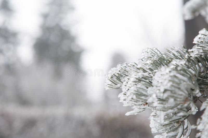 Fond de l'hiver Arbre de Noël congelé et neige brouillée images stock