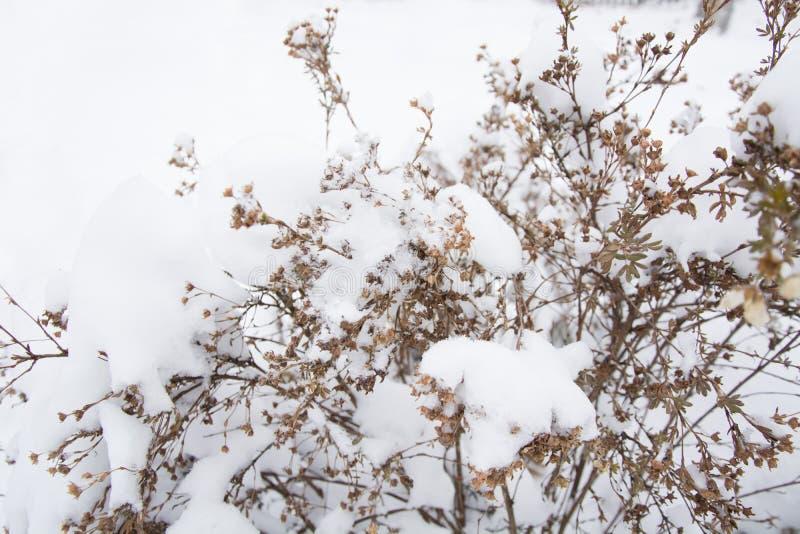 Fond de l'hiver Fleurs sèches et herbe d'épillets couverte de gel photographie stock libre de droits