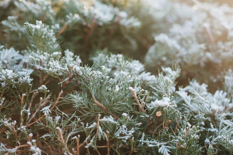 Fond de l'hiver Plan rapproché de sapin dans la neige photo stock