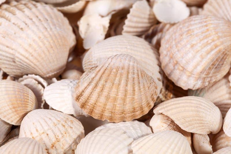 Fond de la collection de diverses coquilles de mer, fin  photos stock