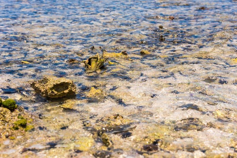 Fond de la mer par l'eau clair comme de l'eau de roche Fond marin de tache floue, fond de la mer rocheux par l'eau claire dans Ba photo libre de droits