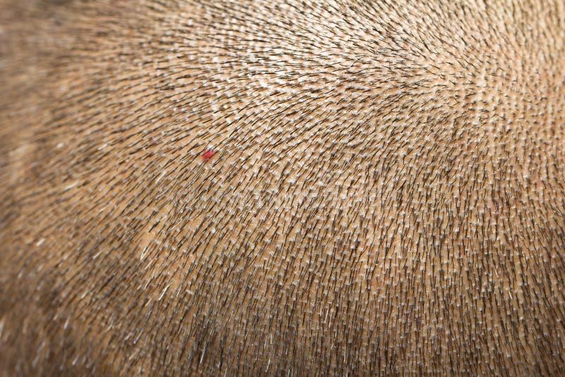 Fond de la peau sur la tête avec de petits cheveux image stock