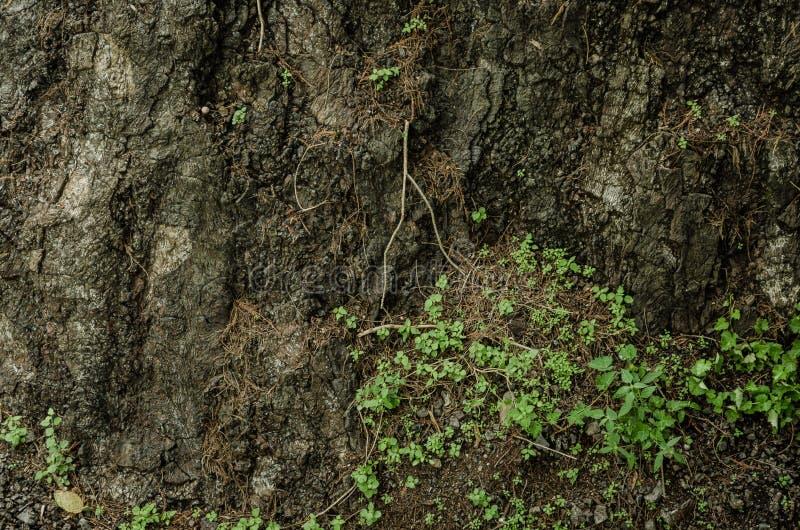 Fond de la terre cassée, mur cassé de saleté avec de petites feuilles vertes photo libre de droits